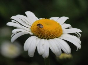 Be found, be read, bee seen: flowers